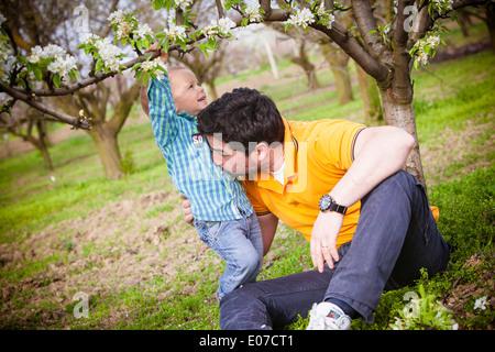 Padre e figlio ingannare circa sotto un albero ciliegio, Austria Foto Stock