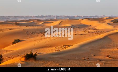 Sabbia paesaggio di dune nel deserto Arabico. Foto Stock
