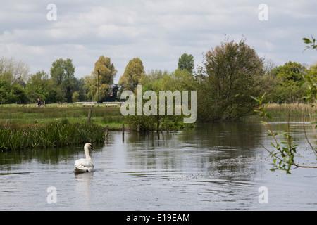 La pittura digitale di un cigno sul fiume Avon nell'acqua Prati, nei pressi della Cattedrale di Salisbury. Ciclista sulla sinistra.