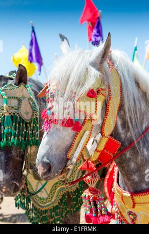 Dettaglio di decorata tradizionalmente Arabian Barb cavalli effettuando in corrispondenza di una fantasia vicino Foto Stock