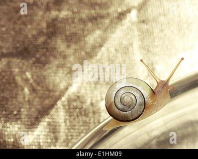 Giardino comune lumaca nastrati strisciando su sfondo metallico Foto Stock