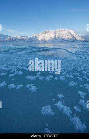 I cristalli di ghiaccio crescono sulla superficie gelata Lago Kluane con pecore di montagna di illuminazione a distanza. Foto Stock