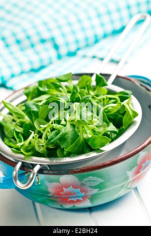 L'insalata di mais, la valeriana in scolapasta Foto Stock