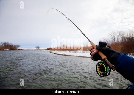 Pesca alla trota sul fiume Bighorn nel Montana, USA Foto Stock