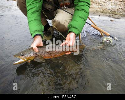 Trota fario catturati durante la pesca con la mosca sul North Platte River in Wyoming, STATI UNITI D'AMERICA. Foto Stock