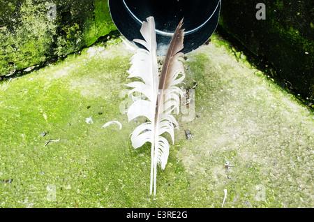 Due piume sul verde sfondo all'aperto Foto Stock