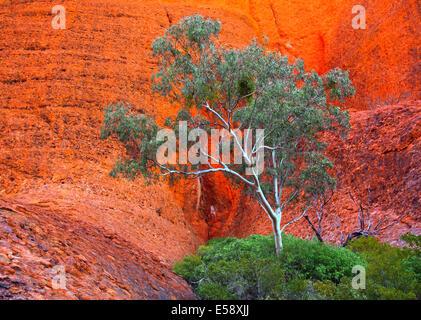 Australia centrale del territorio nord Olgas Kata Juta Foto Stock