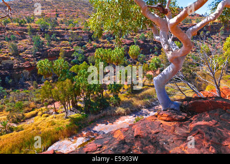 Palm Valley Central Australia Territorio del Nord Foto Stock