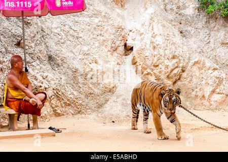 Monaco buddista con una tigre del Bengala presso il Tempio di Tiger su maggio 23, 2014 in Kanchanaburi, Thailandia Foto Stock