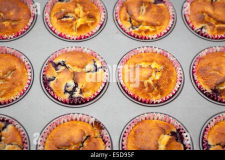 Muffin ai mirtilli nel vassoio da forno Foto Stock