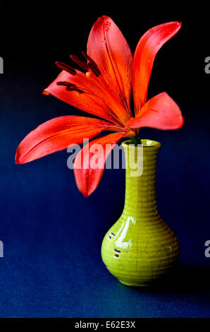 Red Tiger lily in un vaso verde Foto Stock