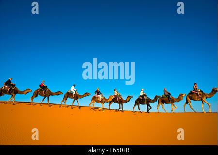 I turisti a cavallo di cammelli sulle dune di sabbia di Erg Chebbi, il Deserto del Sahara, sud del Marocco, Marocco Foto Stock