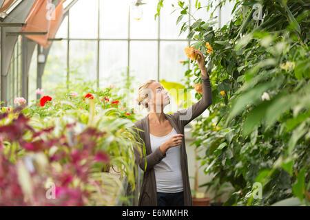 Fioristi donna che lavorano in serra. Foto Stock