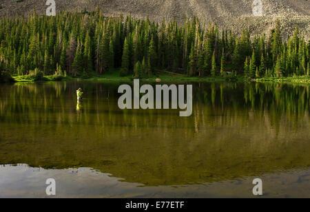 Pescatore a mosca la cattura di trota in lago di montagna vicino a Boulder, Colorado, STATI UNITI D'AMERICA Foto Stock
