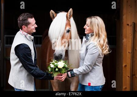 L uomo dando una donna fiori, Haflinger tirolese di mangiare i fiori, Tirolo del nord, Austria Foto Stock