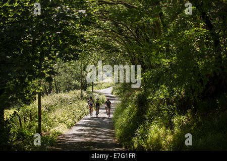 Tre i ciclisti cavalcare un sentiero ombreggiato attraverso una foresta di Pembrokeshire, Galles Foto Stock