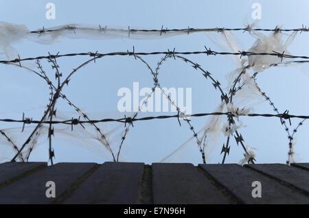 Galvanizzata con livello di protezione alto filo di rasoio e fili spinati deterrente per rallentare l arrampicata Foto Stock