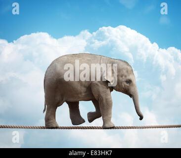 Elefante sul polpaccio tightrope Foto Stock