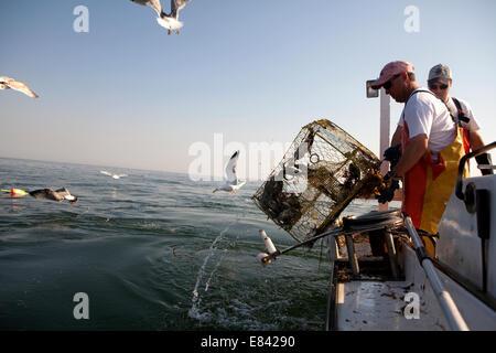 I pescatori di caricamento trappola di granchio a bordo di barche da pesca, Chesapeake Bay, Maryland, Stati Uniti Foto Stock