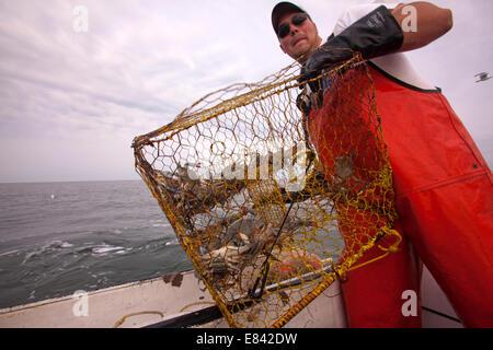 Fisherman caricamento trappola di granchio a bordo di barche da pesca in mare, la baia di Chesapeake, Maryland, Foto Stock