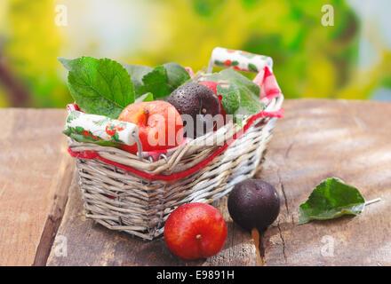 Appena raccolto rosso e viola damson prugne in un cesto di vimini su un vecchio di tavoli in legno all'esterno Foto Stock