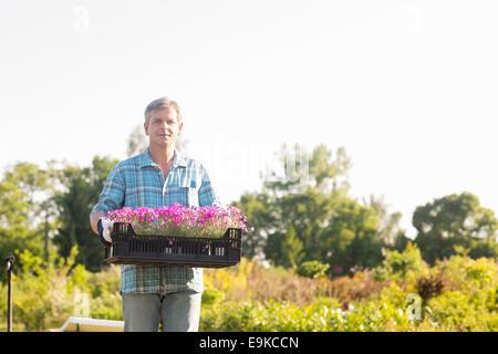 Ritratto di giardiniere portante cassa con vasi di fiori nel giardino Foto Stock