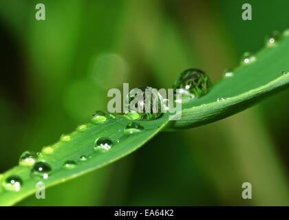 Waterdrops Foto Stock