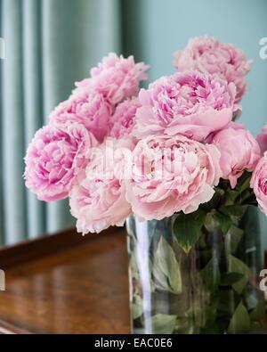 Rosa le peonie nel vaso di vetro Foto Stock