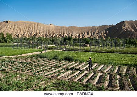 Un agricoltore passeggiate attraverso i campi di appena piantato le patate e grano. Foto Stock