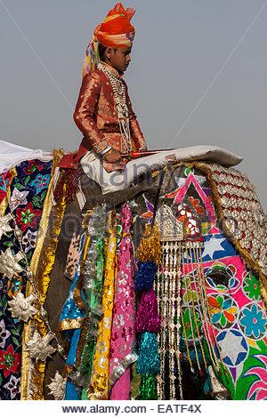 Un ragazzo vestito come royalty a cavallo di un decorato Elefante asiatico presso il Festival di elefante. Foto Stock
