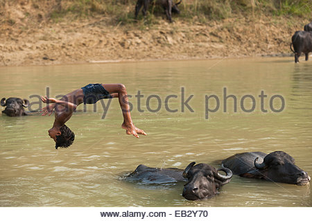 Un ragazzo messing about nel fiume immersioni subacquee dal retro di un bufalo indiano di acqua in Nepal Foto Stock