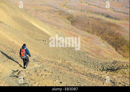 Stati Uniti d'America, Alaska Denali National Park, maschio escursionista sul sentiero Foto Stock