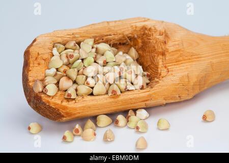 Il grano saraceno (Fagopyrum esculentum), semi su un cucchiaio di legno Foto Stock