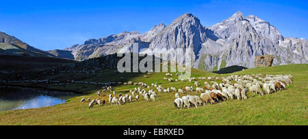 Le pecore e il lago di Cerces vicino a Briancon città, Francia, Savoie , Hautes-Alpes, Briancon Valloire Foto Stock