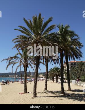 Le lavandou a sud della francia spiaggia con palme.un comune nel dipartimento del Varo nella regione Provenza-Alpi Foto Stock
