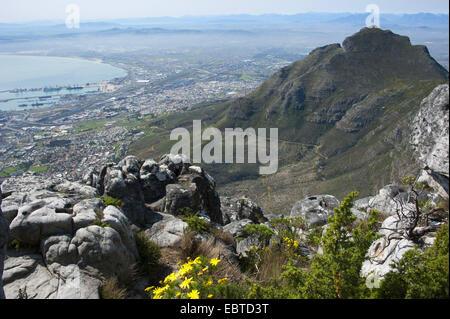 Vista dalla Montagna della Tavola sopra la città, Sud Africa, Western Cape, Città del Capo Foto Stock