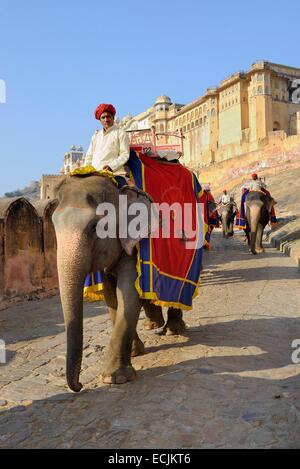 India Rajasthan, Ambra Fort, elefanti e mahouts Foto Stock