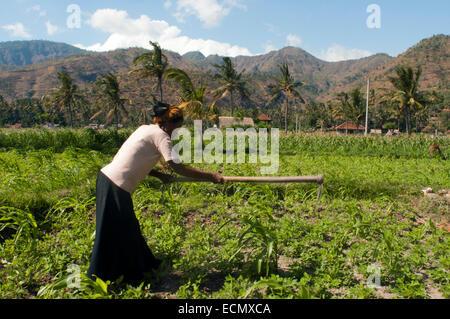 Campi vicino al villaggio di pescatori di Amed est la cultura di Bali. Amed è una lunga striscia costiera di villaggi Foto Stock