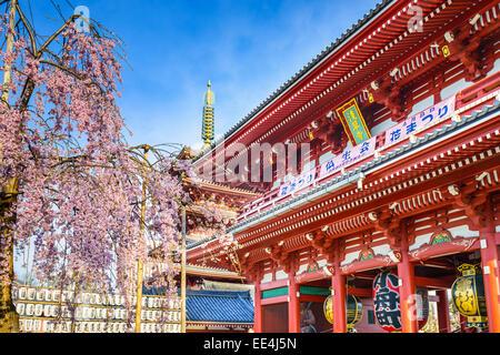 Il Tempio di Senso-ji di Asakusa, Tokyo, Giappone durante la primavera Sakura stagione. Foto Stock