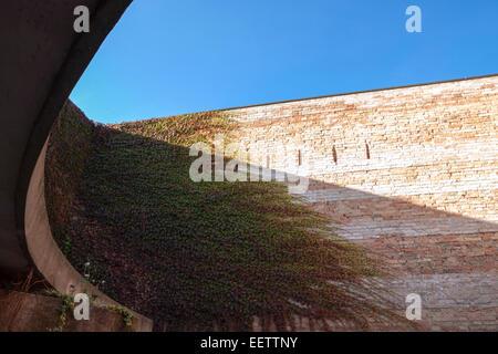 Dettagli e linee della parete di edera nel cielo blu. Venezia, Veneto. Italia