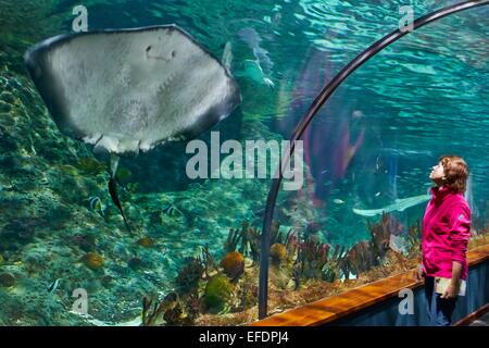 La Stingray, acquario in Loro Parque, Puerto de la Cruz, Tenerife, Isole Canarie, Spagna Foto Stock