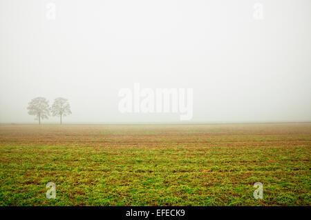 Nebbioso campo rurale con alberi Foto Stock
