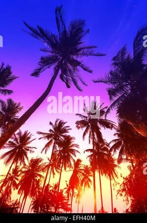 Palme sagome sulla spiaggia tropicale al tramonto. Foto Stock