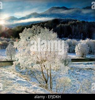 Frosty winter wonderland vicino a Glenfinnan, Lochaber Foto Stock