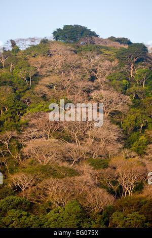 Luce del sole di mattina su una collina boschiva nel parco nazionale di Soberania, Repubblica di Panama. Foto Stock