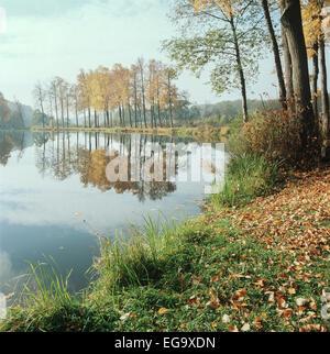 Scansione dal formato del supporto di pellicola di un autunno stagno circondato da alberi di giallo riflettendo in esso. Foto Stock
