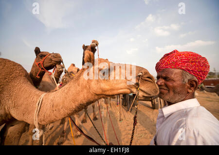 Uomo di Rajasthani con tipici costumi tradizionali e i suoi cammelli al camel e fiera del bestiame Pushkar Mela, Pushkar, India
