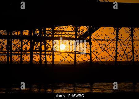 Aberystwyth, Wales, Regno Unito. 8 Marzo, 2015. Regno Unito: meteo alla fine di un pomeriggio di cielo azzurro e il caldo sole primaverile, con il sole che tramonta spettacolarmente su Cardigan Bay, 'murmurations' di migliaia di storni volare in al tramonto a stabilirsi per la notte della ghisa alle gambe del lungomare vittoriano pier a Aberystwyth sulla West Wales coast UK. Il posatoio notturno in Aberystwyth è uno dei soli tre posatoi urbano nel Regno Unito e richiama regolarmente una folla di curiosi e fotografi ogni sera. Credito: keith morris/Alamy Live News