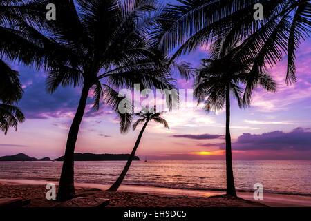 Sfondo di vacanza fatta di palme sagome al tramonto. Foto Stock