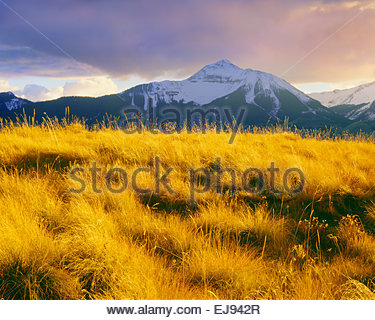"'Sunshine Mountain' autunno 'San Juan Mountains"" ""Uncompahgre National Forest' Colorado Foto Stock"